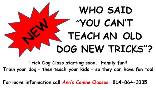Ann's Canine Classes